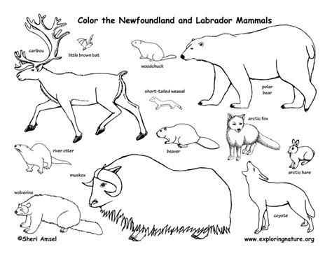 coloring pages of newfoundland canadian province newfoundland and labrador