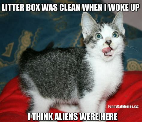 Cat Alien Meme - who cleaned the litter box funny kitten meme