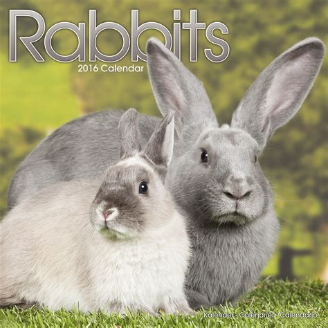 rabbits calendar 2016 pet prints inc