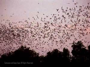 Bats In Tx Ten Tips For Visiting The Bats Of Suitcases And