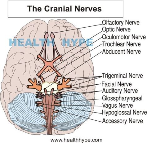 accessing the healing power of the vagus nerve self help exercises for anxiety depression and autism books nerve damage