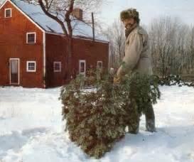 starting a christmas tree business modern homesteading