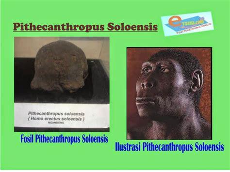penemuan manusia purba di indonesia eyuana