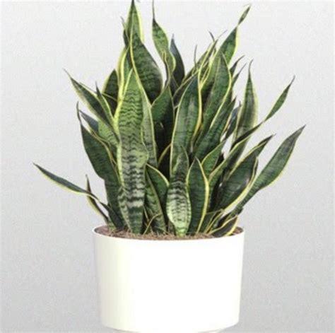 tanaman  wajib   rumah