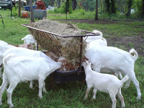 hay racks for goats goat feeder w hay rack