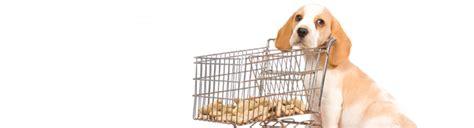 puppy shopping veterinarians mission ks dearborn animal clinic