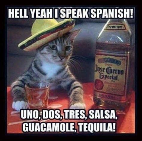 Funny Tequila Memes - 1000 images about that s a knee slapper on pinterest