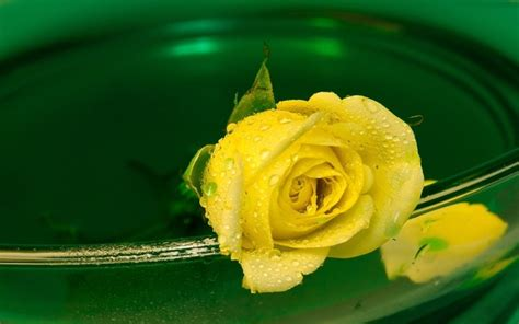 beautify worldwide the 38 most beautiful pictures of roses you will ever see