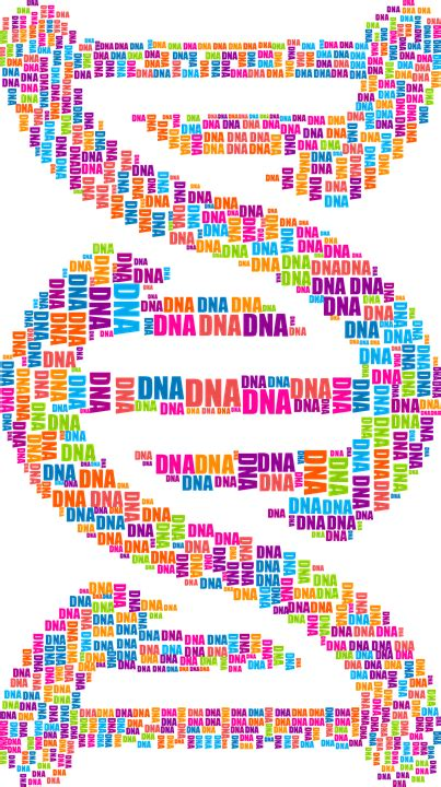 dna pattern finder free vector graphic dna deoxyribonucleic acid free