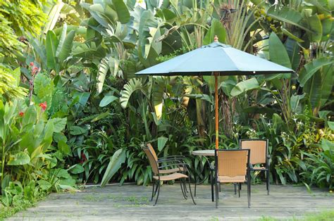 29 Serene Garden Patio Ideas And Designs Picture Gallery Tropical Patio Plants