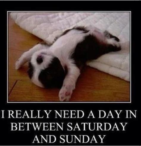 Funny Saturday Memes - meme bella my bff