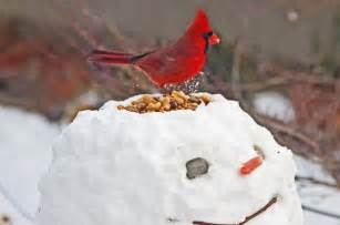 winter birds myths and facts birds and blooms