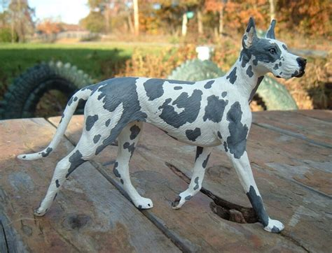 great dane colors harlequin 23 best colors of great danes images on great
