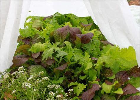row cover december greens winter vegetables gardening