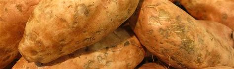 can dogs eat sweet potatoes can rabbits eat sweet potatoes facts