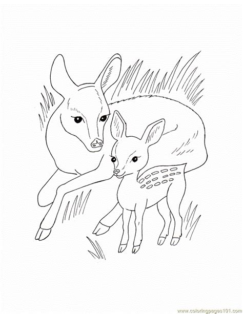 coloring pages animals wild wild animal coloring page free wild animals coloring