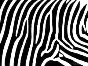 zebra print designs zebra print the animal life