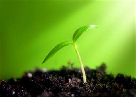what of light do plants need what do plants need to live
