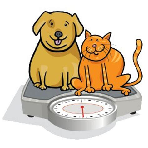 healthy fats for dogs balance dogs low calorie