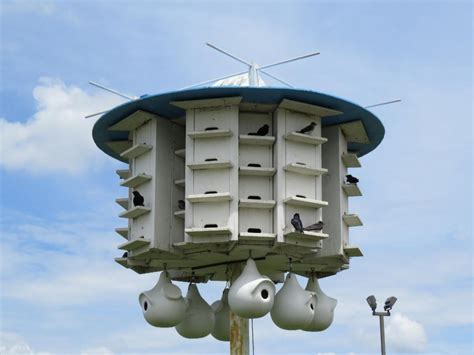 Purple martin bird houses: for sale, plans