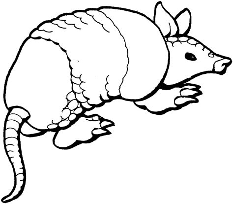 armadillo clip art cliparts co