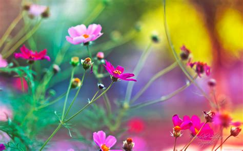 win with flower flower wallpapers for windows 10 wallpapersafari