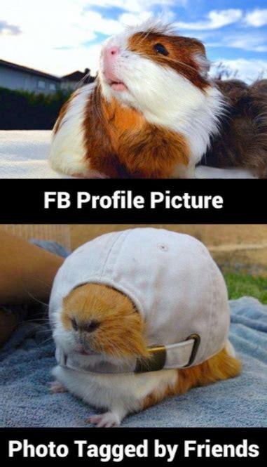 Funny Fb Memes - animal memes fb profile pic funny memes
