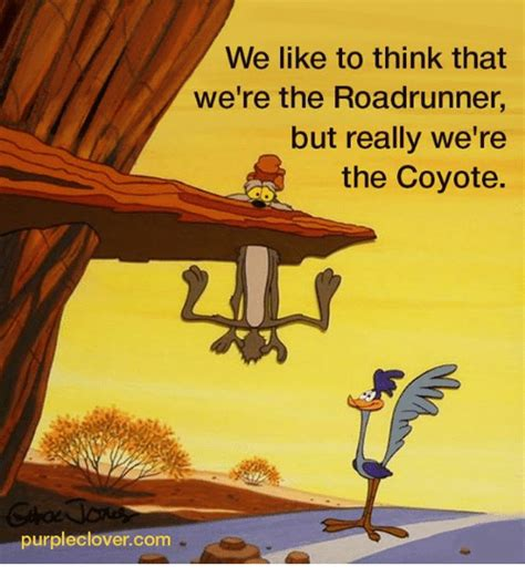 funny coyote road runner best 17 funny road runner pics cutest cats