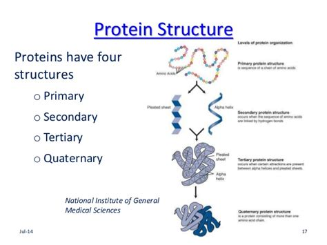 4 protein structures microbiology for nursing students 2 review of macromolecules