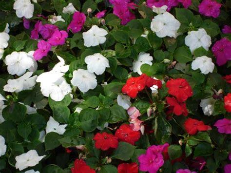 annual flowers birmingham michigan total lawn care inc