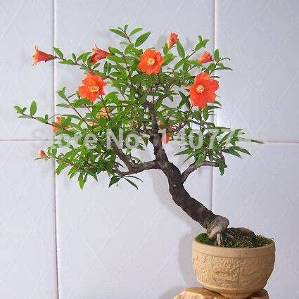 vasi bonsai cinesi acquista all ingrosso stili di bonsai da grossisti