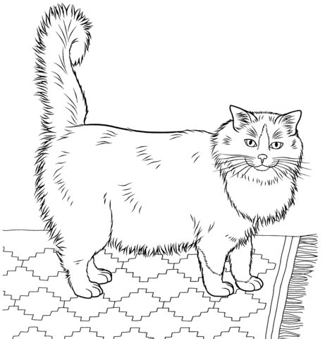 ragdoll cat coloring page 301 moved permanently