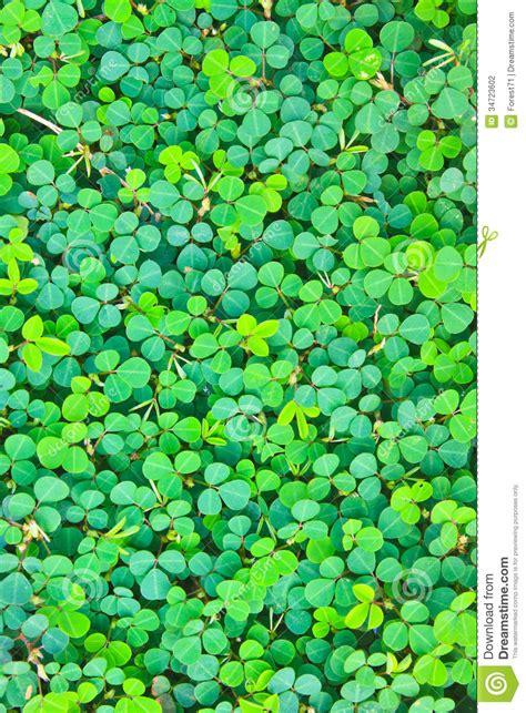 pattern stock photo free pattern oxalis acetosella background nature stock photo