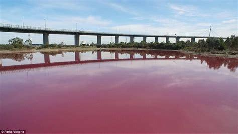 pink lake melbourne melbourne s westgate park lake turns a stunning pink