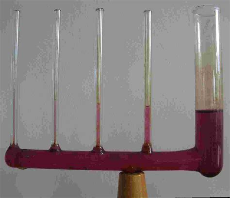 vasi comunicanti fisica vasi comunicanti grandi piccoli capillari immagini