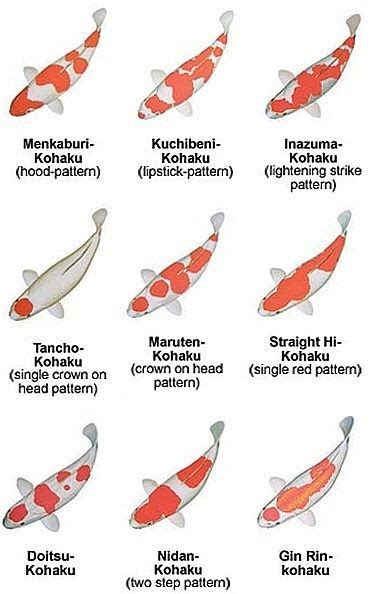 koi fish color meanings japanese fish names search random facts koi