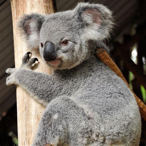 green koala wallpaper hd ipad wallpapers hd ipad wallpapers built on w portfolio
