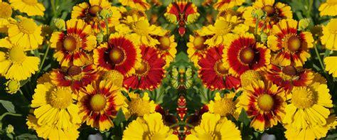 Blumen F R Schattige G Rten 997 by Pflanzen F 252 R Steing 228 Rten Klein Aber Fein Die 7 Besten