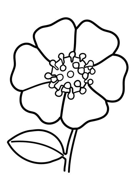 fiore disegno da colorare disegni da colorare fiore