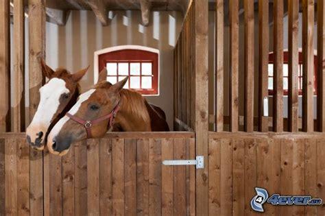 pferde stall stall