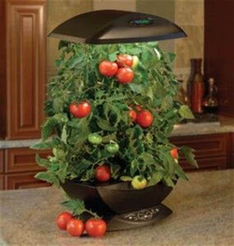 indoor tomato garden 17 best images about indoor tomatoes on