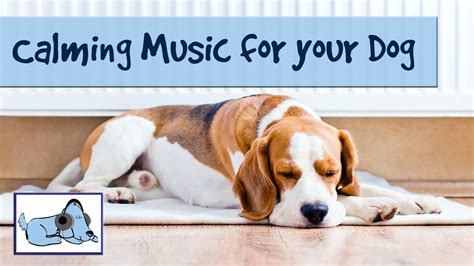 relaxing for dogs calming for dogs improve behavior with relaxing