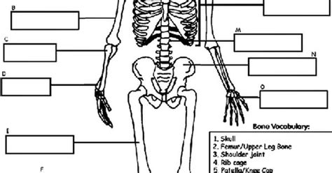 crayola coloring pages human skeleton human skeleton coloring page cc cycle 3 science