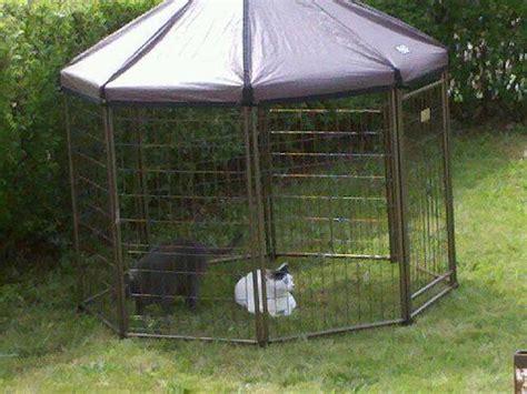 pet gazebo advantek pet gazebo outdoor kennel run pet supplies