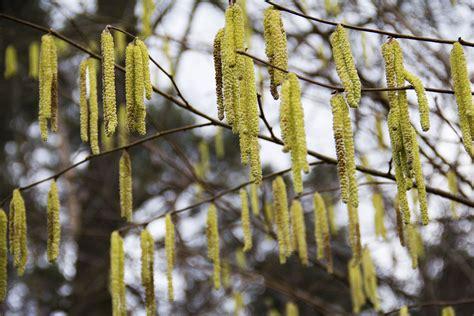 Warum So Viele Pilze Im Garten by Pollenallergie Ursachen Sind Vielf 228 Ltig Gartenpflanzen