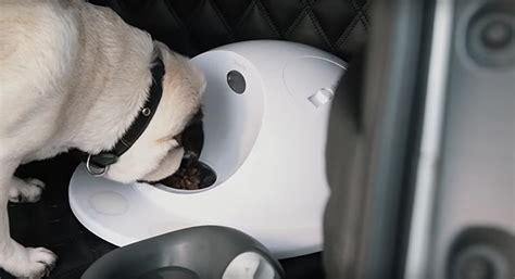 nissan suv for dogs nissan may the coolest vehicle for owners this s