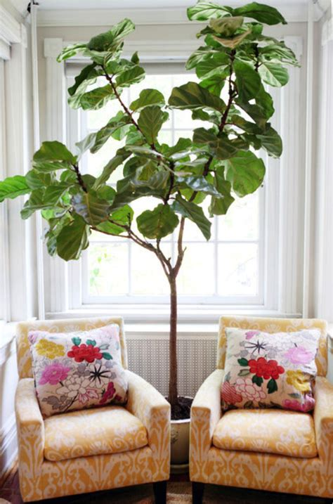 home decor trees indoor plants to spruce up your home all year long