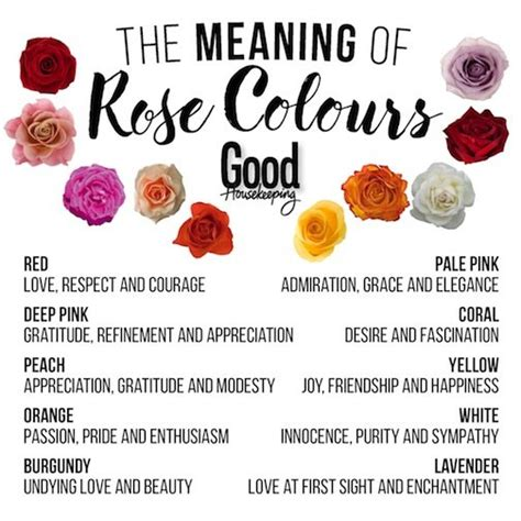 color of roses meanings 10 colours and their meanings housekeeping