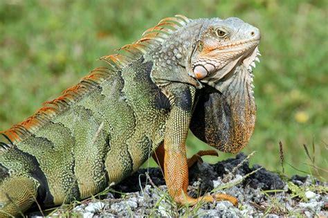 imagenes de animales reptiles heat considerations in reptile husbandry pet lover