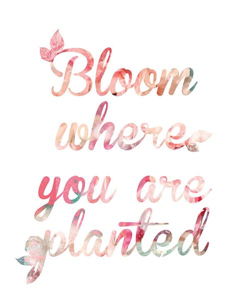 spring quotes bloom where you are planted quote art print coral
